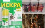 Как бороться с муравьями и тлей на яблоне