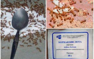 Как бороться с красными муравьями