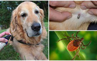 Спреи для собак от клещей и блох