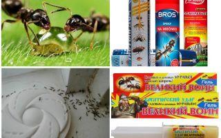 Как уничтожить муравьев и муравейник