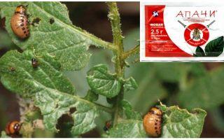 Как разводить Апачи от колорадского жука