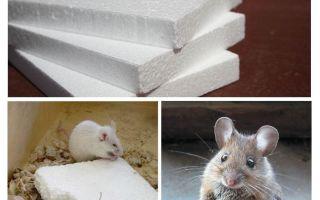 Грызут ли мыши пенопласт