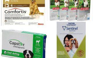 Как избавиться от блох у собаки, самые эффективные средства от блох