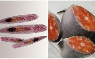 Паразиты в морской и речной рыбе
