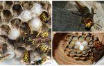 Как убрать гнездо шершней