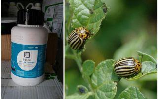 Средство от колорадского жука Борей