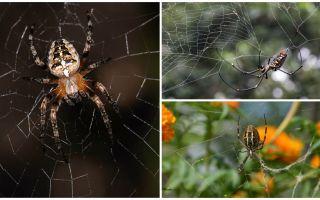 Умеют ли пауки летать