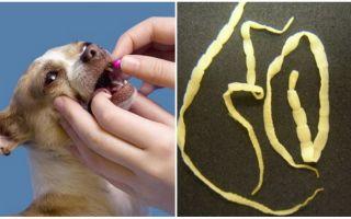 Эффективные таблетки от глистов для собак