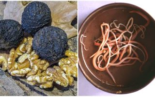 Грецкие и черные орехи от паразитов