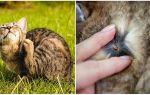 Препараты от клещей для кошек