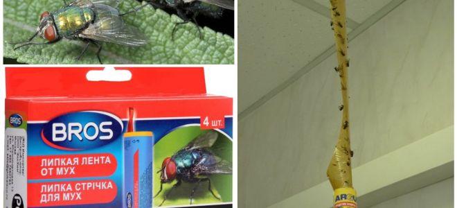 Магазинные и народные средства от мух