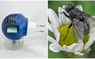 Фумигаторы от мух и комаров в розетку