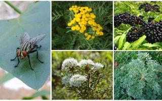 Какого запаха боятся мухи и комары