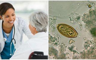 Какой врач лечит паразитов у взрослых