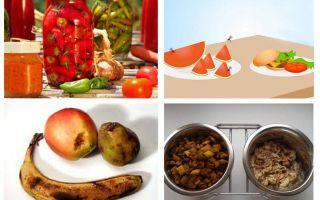 Что едят мошки и их личинки