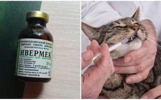 Применение Ивермека в ветеринарии для кошек