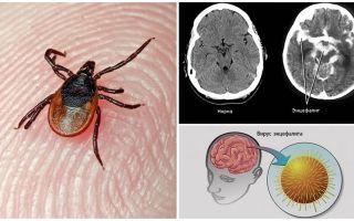 Лабораторная диагностика клещевого энцефалита и боррелиоза