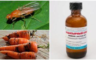 Борьба с морковной мухой нашатырным спиртом
