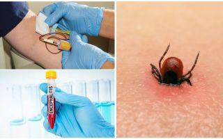 Клещи в Башкирии: куда сдать, анализы, прививки, обработка