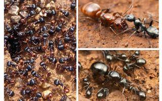Стадии развития муравья