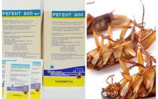 Средство Регент 800 от тараканов