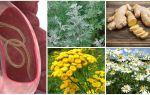 Травы от глистов и паразитов у взрослых и детей