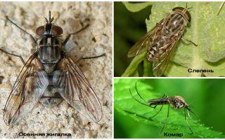 ТОП самых опасных насекомых мира