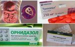 Лучшие препараты для лечения лямблий у взрослых
