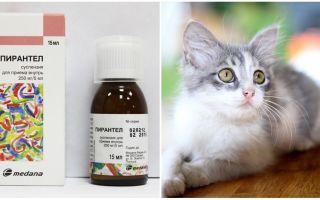 Суспензия Пирантел для кошек и котят