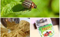 Горчица и уксус против колорадского жука: пропорции и отзывы