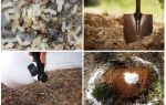 Как вывести муравьев с огорода народными средствами