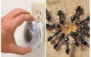 Эффективные ультразвуковые отпугиватели муравьев