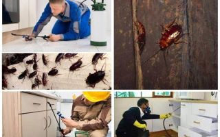 Борьба с тараканами в квартире в домашних условиях