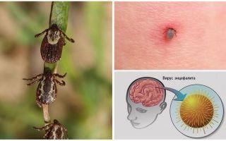 Профилактика клещевого энцефалита: осторожно, клещи
