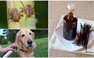 Средство водка с ванилином от клещей для собак