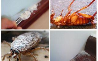 Обзор дустов от тараканов
