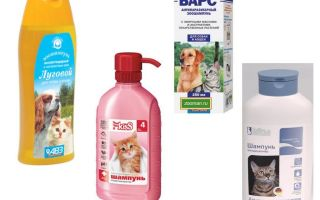 Обзор самых эффективных средств от блох для кошек