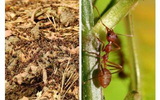 Чем полезны муравьи