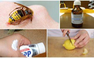 Как и чем снять зуд от укуса осы в домашних условиях