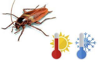 Чего боятся тараканы в квартире
