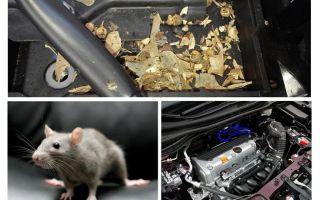 Как вывести мышей из машины