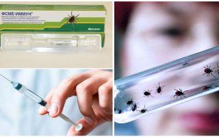 Клещи в Екатеринбурге: куда сдать, анализы, прививки