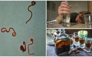 Как алкоголь влияет на глистов и паразитов