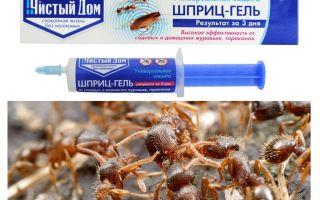 Чистый Дом от муравьев