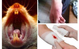 Что делать если укусила мышь