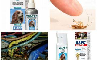 Средство Барс от тараканов