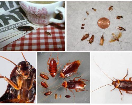 Сонник тараканы к чему они снятся