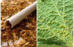 Табак против тли