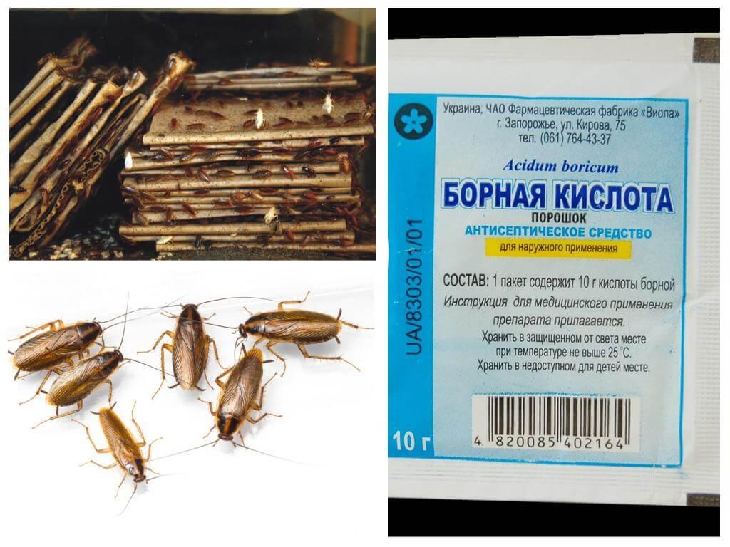 Чем вывести тараканов в домашних условиях быстро 681