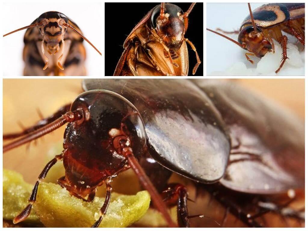 Тараканы во сне к чему снятся кусают